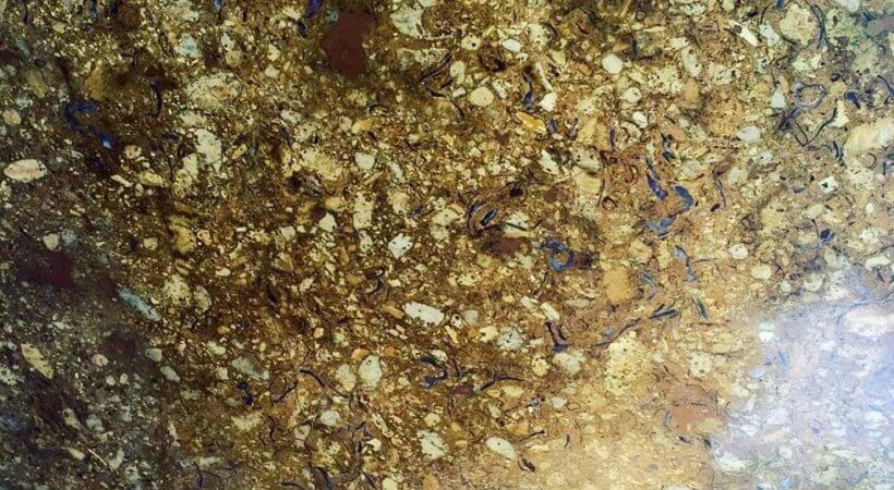 Panther Gold Marble
